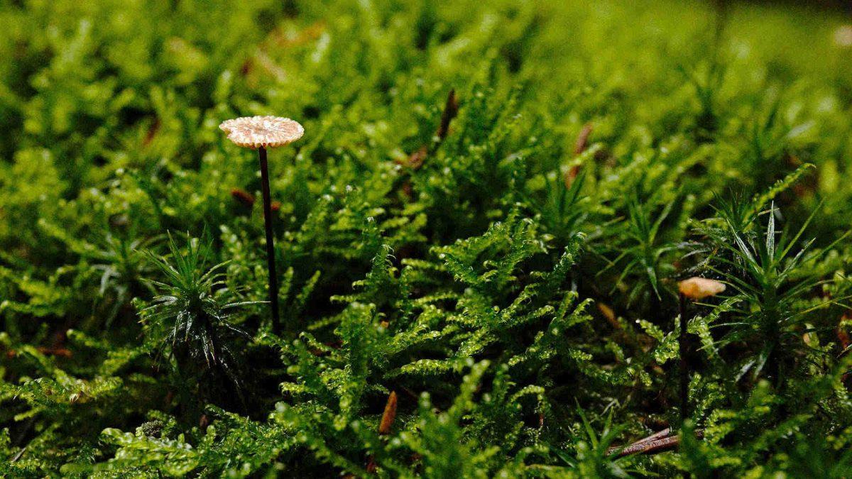 miniatur pilz im reinhardswald