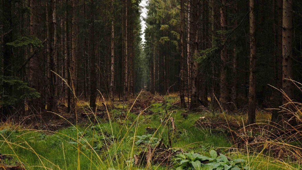 reinhardswald im herbst baumschneise