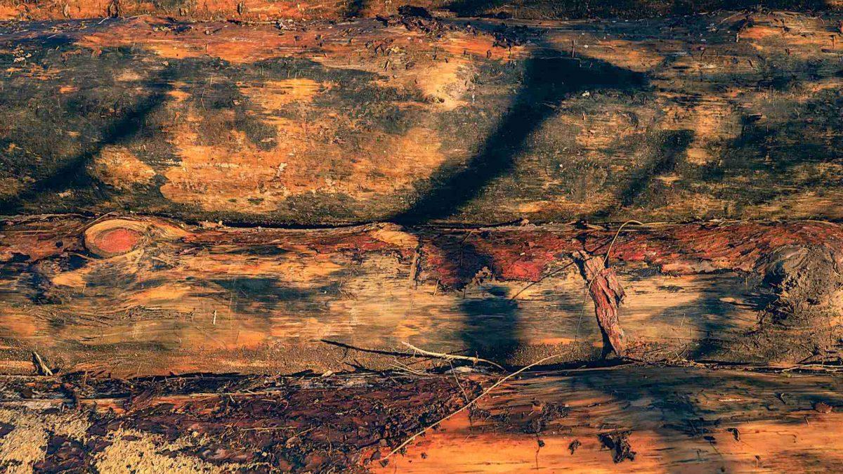 holzstapel mit schatten im reinhardswald