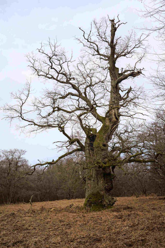 Alter Baum auf der Wiese