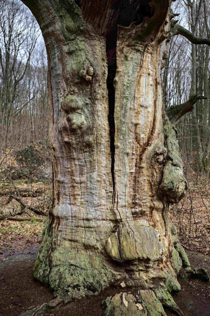 Gespaltener Baum