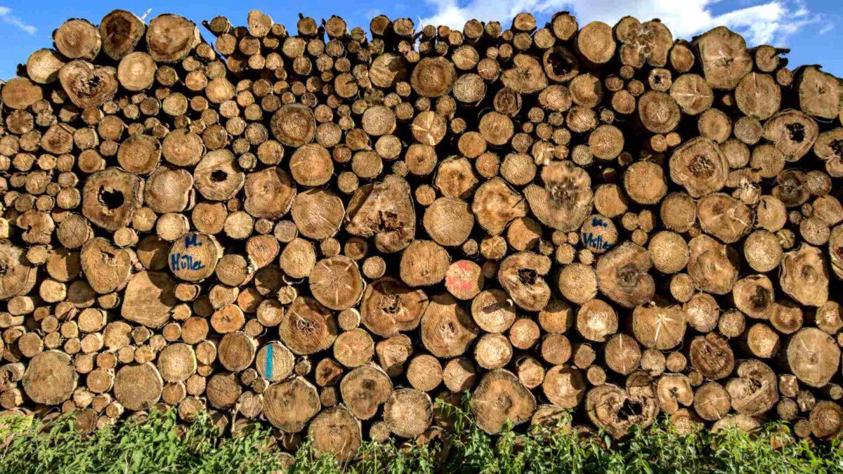 Holzstapel vor blauem Himmel