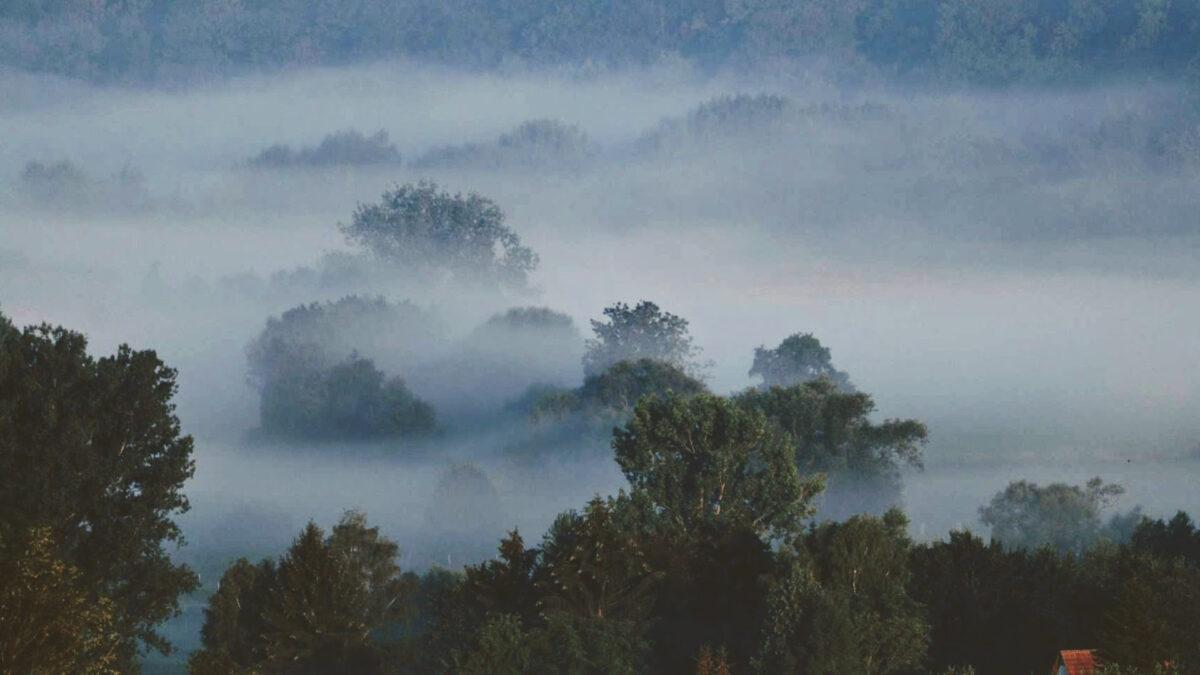 Wald im Nebel am Morgen
