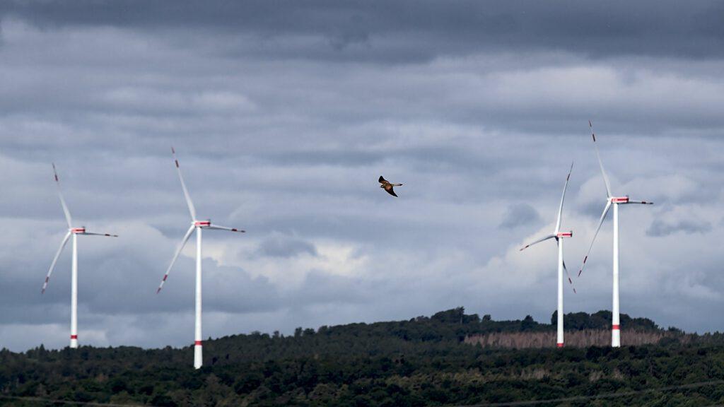 Vogel vor Windkraftanlagen