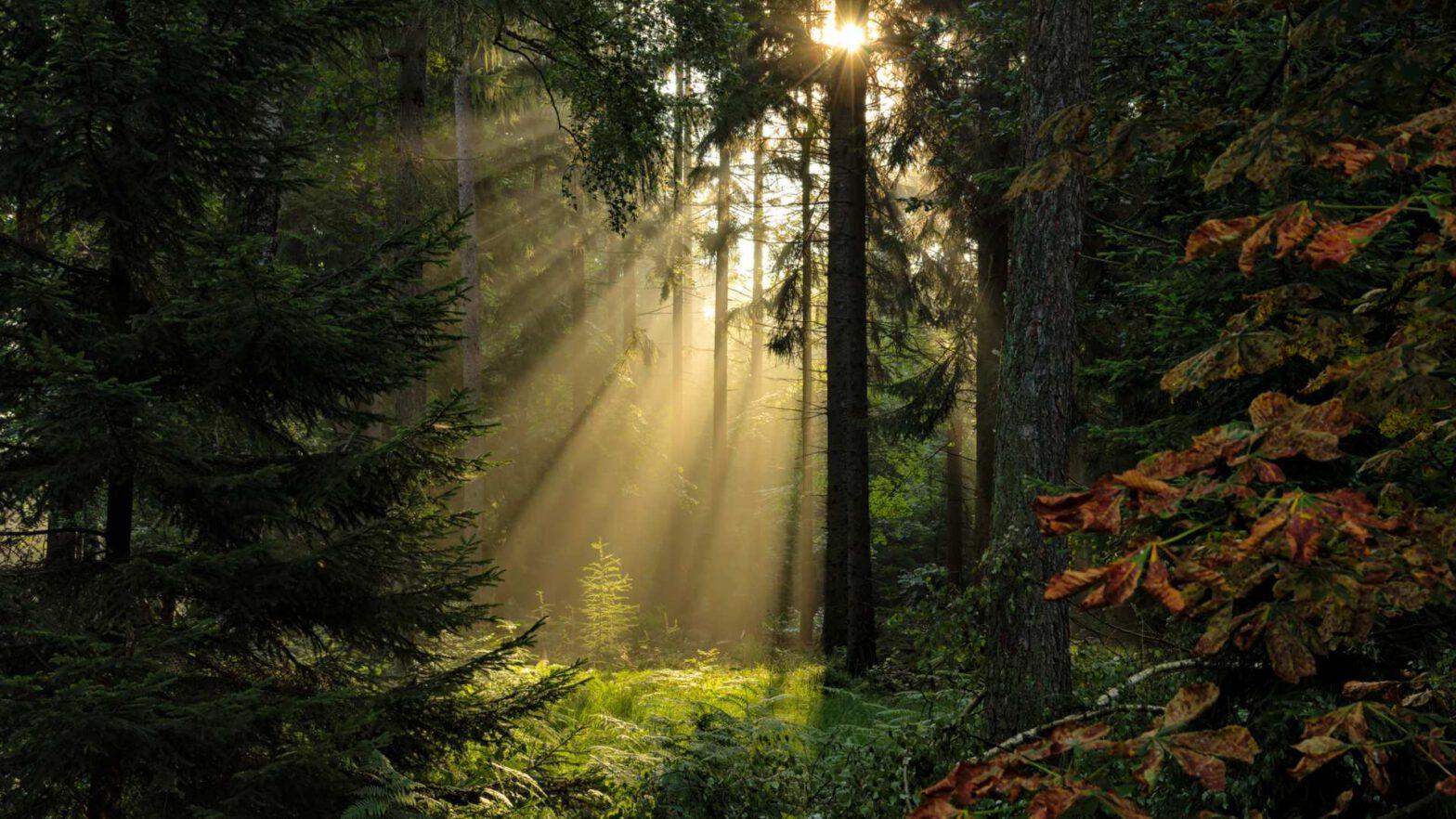 Sonnenstrahlen im Reinhardswald